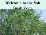 welcome to the salt bush zone