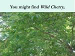 you might find wild cherry