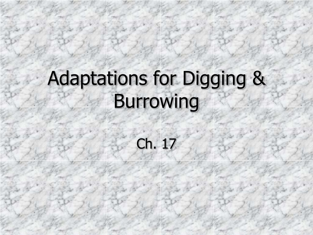 adaptations for digging burrowing l.