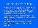 feet first burrowing fogs