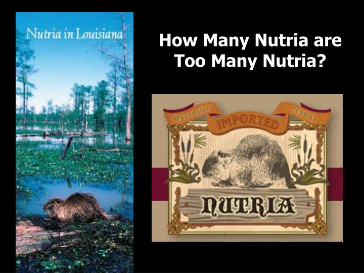 How Many Nutria are