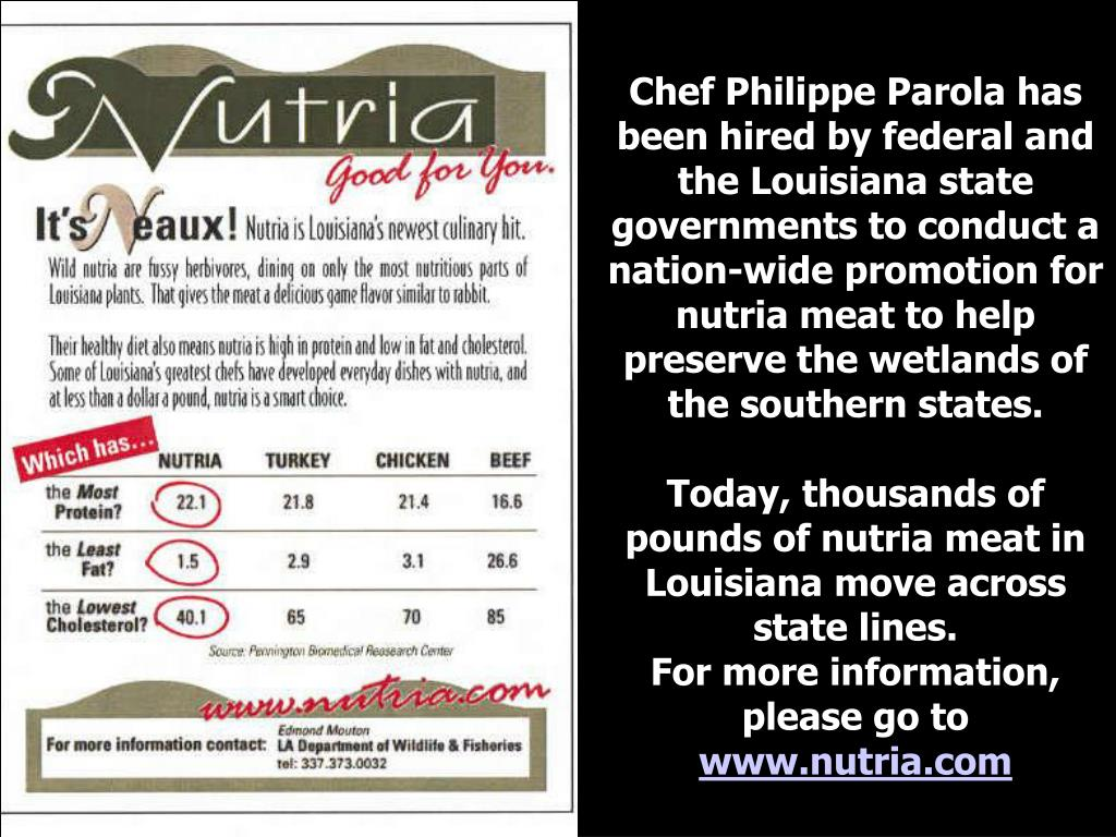Chef Philippe Parola has been hired by federal and the Louisiana state governments to conduct a nation-wide promotion for nutria meat to help preserve the wetlands of the southern states.