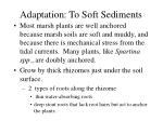 adaptation to soft sediments