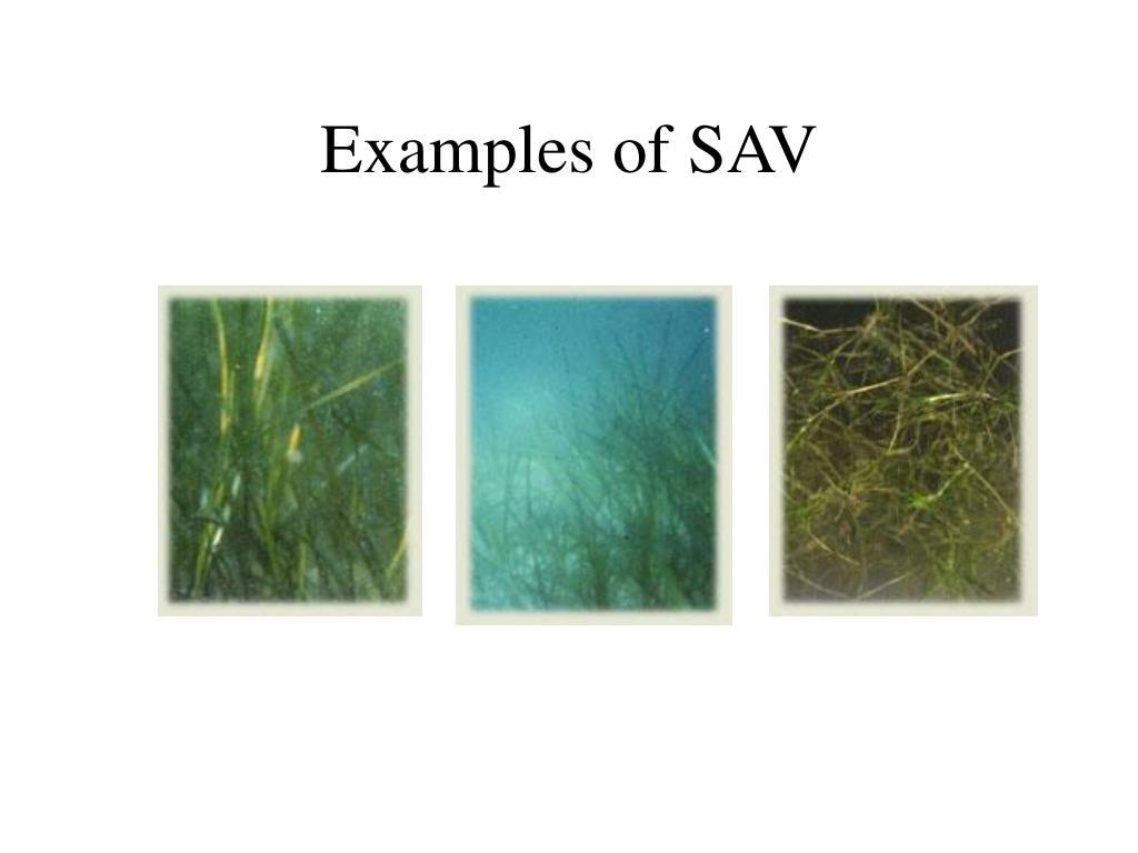 Examples of SAV