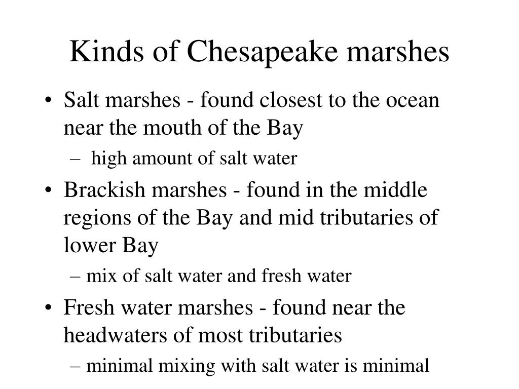 Kinds of Chesapeake marshes