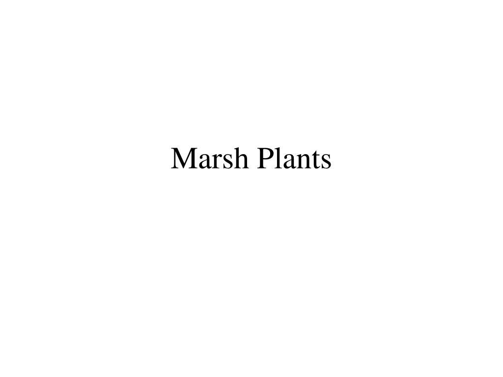 marsh plants l.