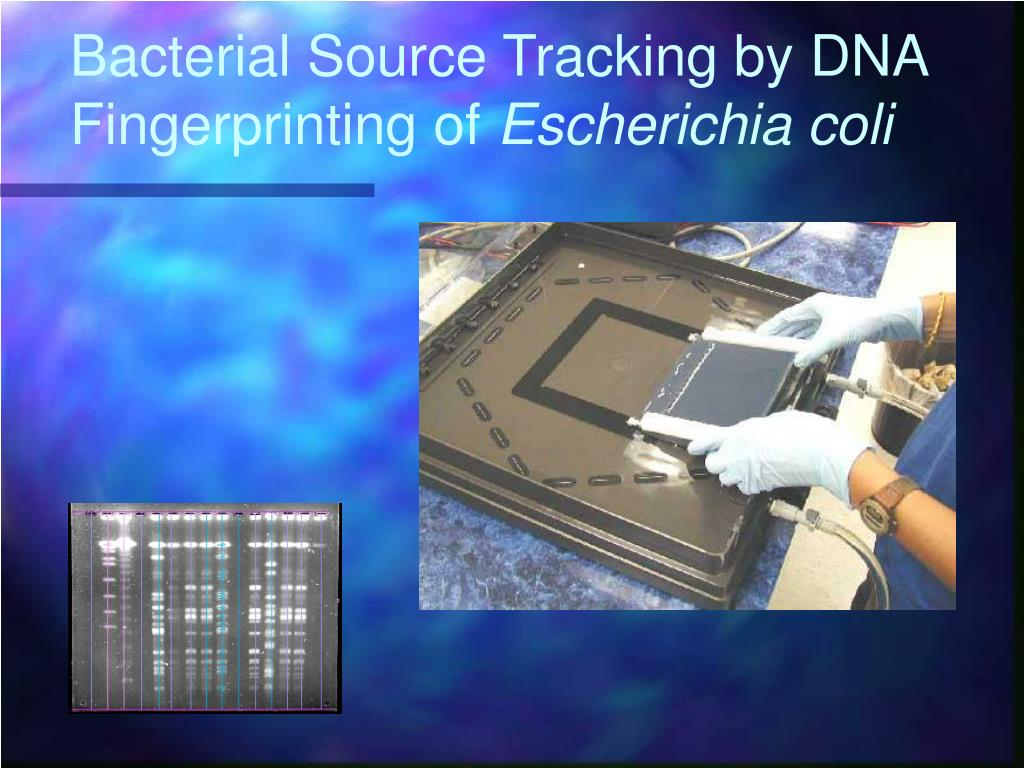 bacterial source tracking by dna fingerprinting of escherichia coli l.