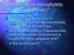 are the cetacea monophyletic or polyphyletic