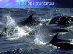 tursiops truncatus114