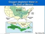 oxygen depleted water in the gulf of mexico