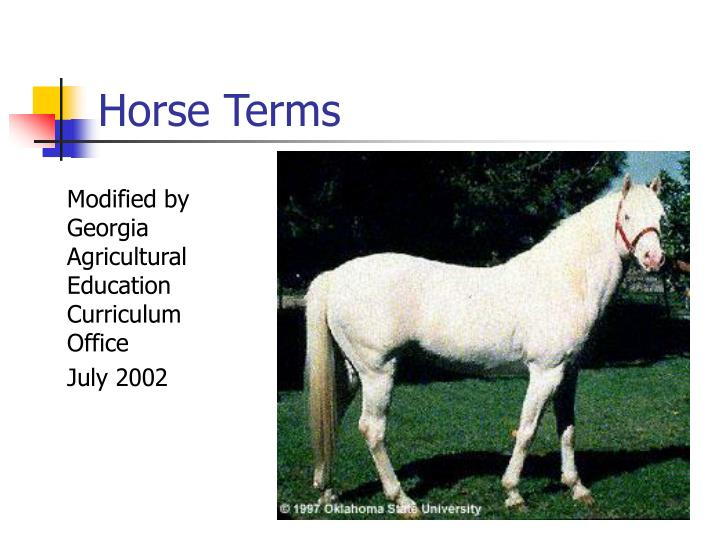 horse terms n.