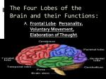 the four lobes of the brain and their functions
