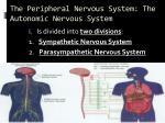 the peripheral nervous system the autonomic nervous system