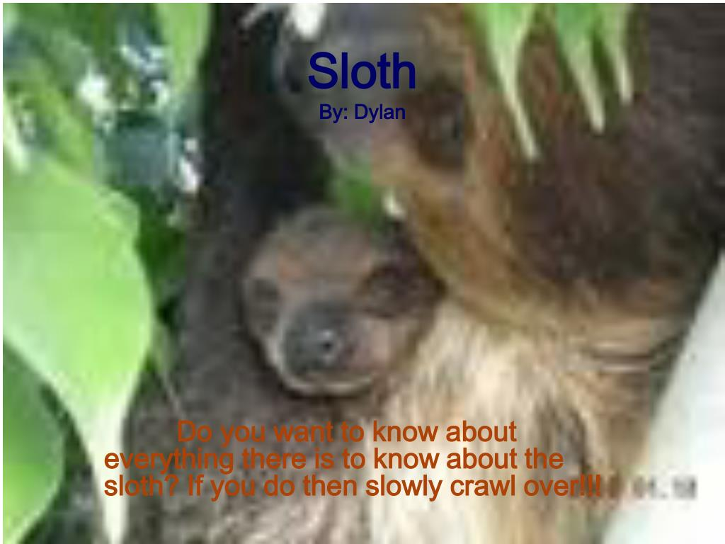 sloth by dylan l.