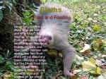 sloths4