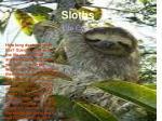 sloths5