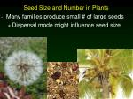 seed size and number in plants