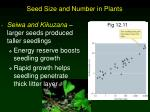 seed size and number in plants4