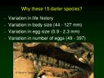 why these 15 darter species