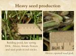 heavy seed production