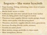 impacts like water hyacinth
