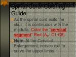 spinal cord coloring guide