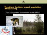 woodland caribou boreal population threatened