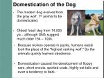 domestication of the dog
