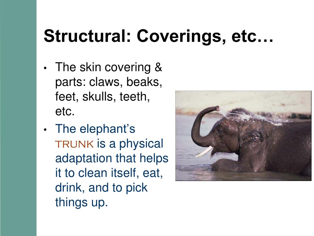 Structural: Coverings, etc…
