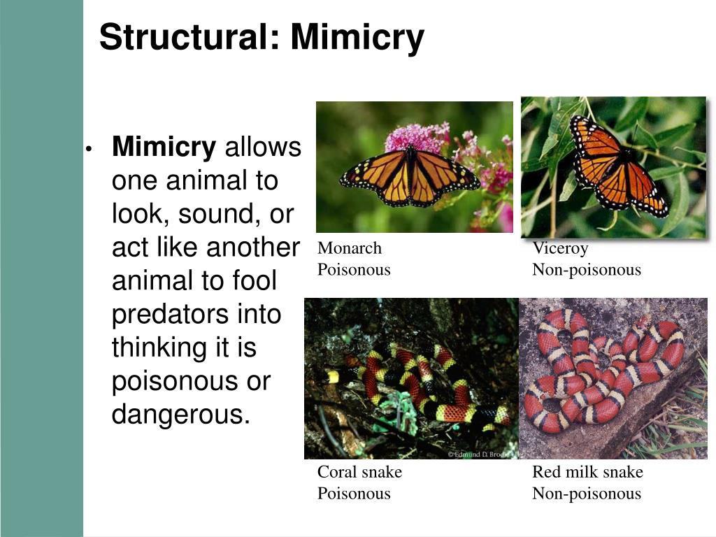 Structural: Mimicry