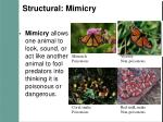 structural mimicry