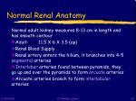 normal renal anatomy