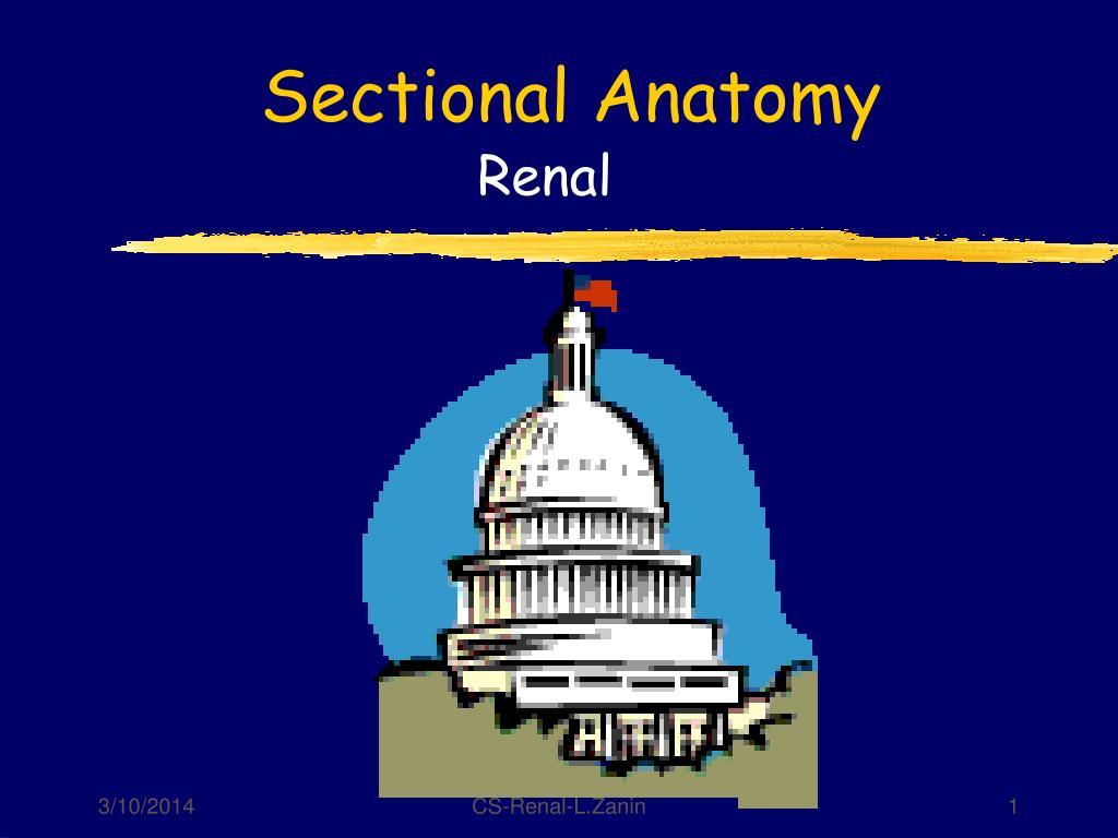 sectional anatomy