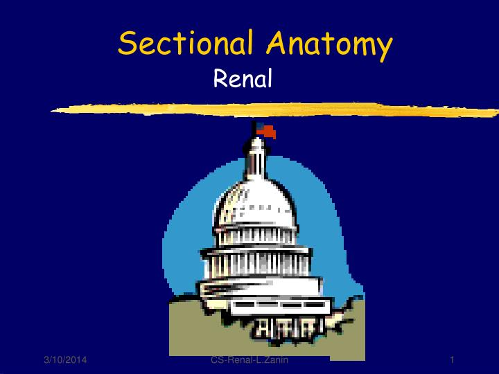 sectional anatomy n.