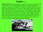 snakes cont2