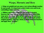wasps hornets and bees
