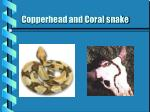 copperhead and coral snake