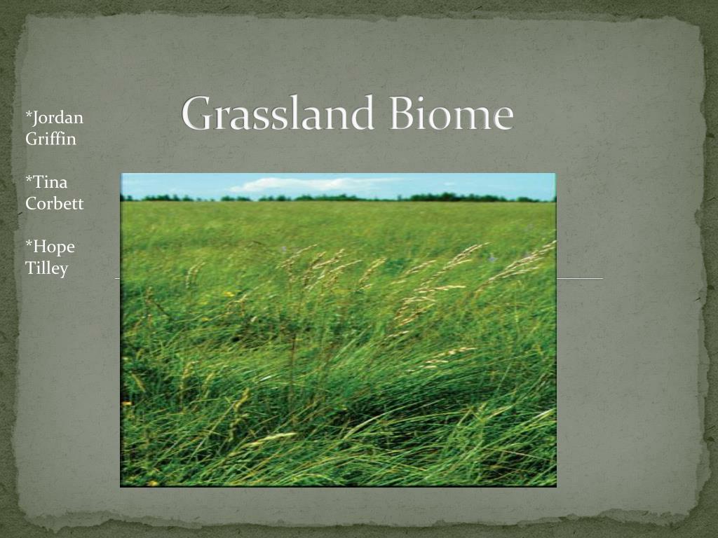 grassland biome l.