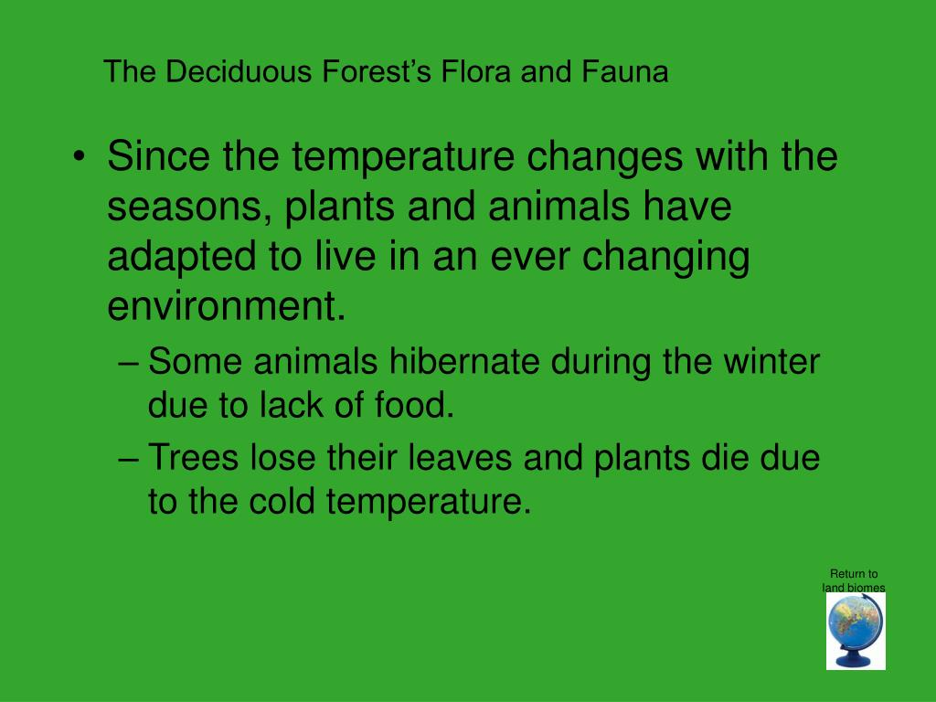 The Deciduous Forest's Flora and Fauna