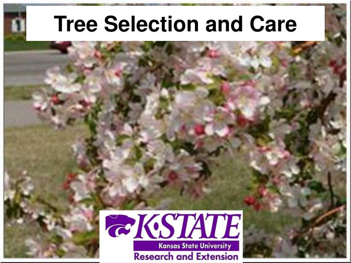 tree selection and care n.