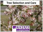 tree selection and care