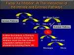 factor xa inhibition at the intersection of the intrinsic and extrinsic pathways