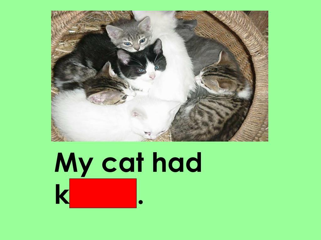 My cat had kittens.
