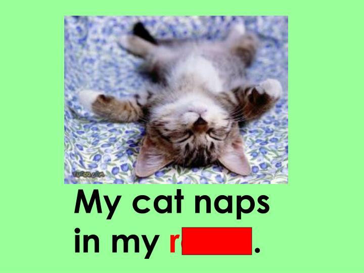 My cat naps
