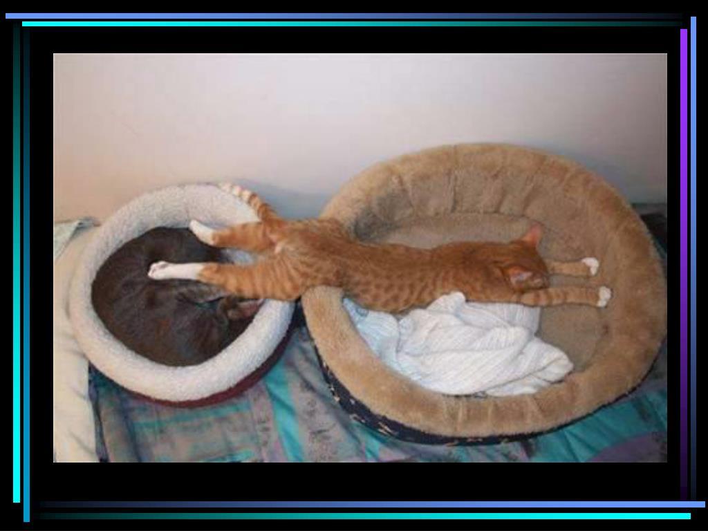 Cat in 2 beds
