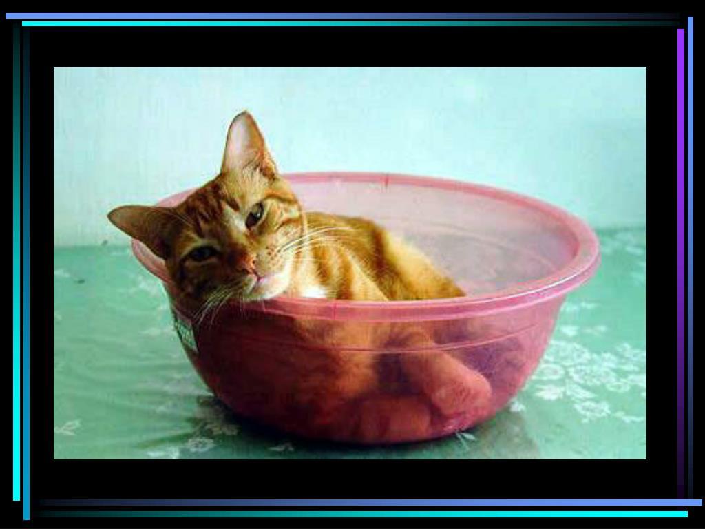 Cat in bowl