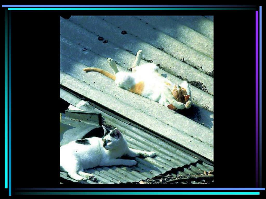 Cat on tin roof