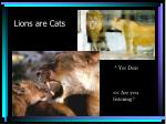 lions are cats