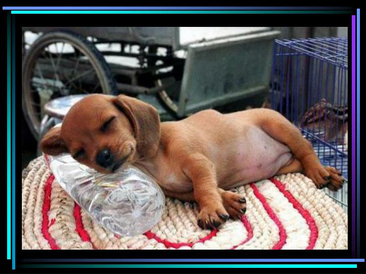 Puppy sleeps