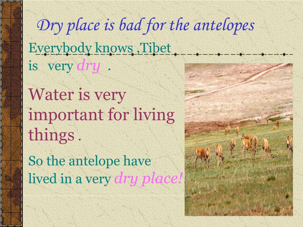Dry place is bad for the antelopes